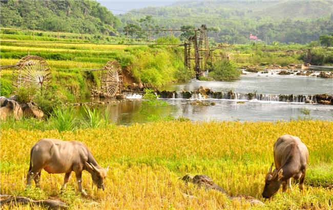 Venture off beaten paths in Far North Vietnam ( Tonkin )